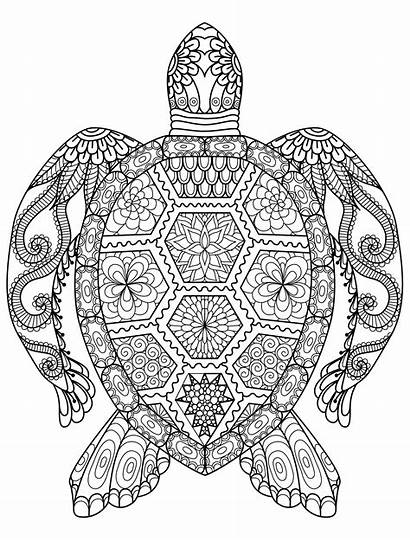 Coloring Pages Adult Animals Adults Animal Turtle