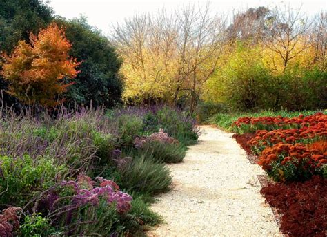 drought resistant garden drought tolerant garden design by eckersley garden architecture modern outdoors