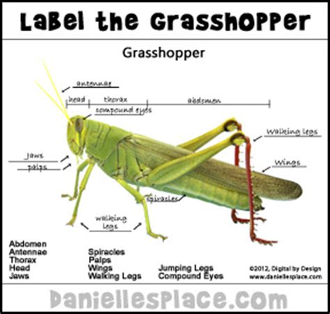 grasshopper crafts and learning activities 407   grasshopper photo label pic dd