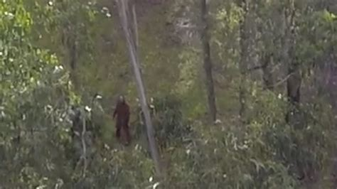 yowie bigfoot drone sighting  forest youtube