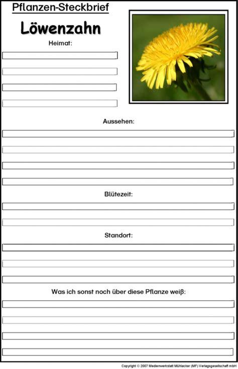 pflanzensteckbrief loewenzahn medienwerkstatt wissen