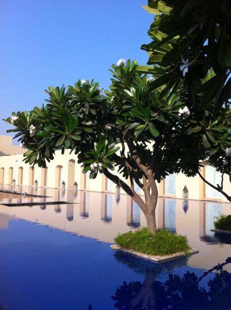 frangipani  front garden architecture   jnu