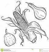 Corn Harvest Illustrations Gourds Illustration Template Coloring Pages Plenty Horn Thanksgiving Doodle Sketch Vector Templates sketch template
