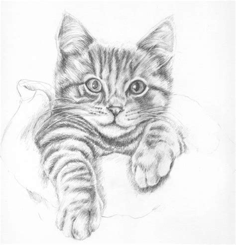 Drawn Kittens Tabby Cat  Pencil And In Color Drawn
