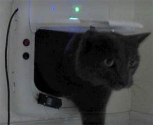 Auto locking pet door ensures that your outdoor kitty for Automatic locking dog door