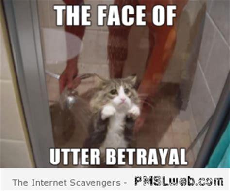 Betrayal Meme - the gallery for gt kermit meme face