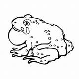 Toad Coloring Pages Captain Printable Animal Print Sheet Animals 600px 52kb Template sketch template