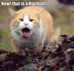 hairball cat celebrate national hairball awareness day with