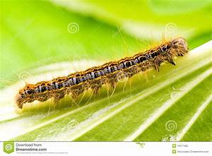 Small Colorful Caterpillar Royalty Free Stock Photo ...