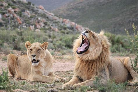 11 Reasons to go on an African Safari   African Budget Safaris