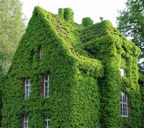 Garden Climbing Plants And Their Contribution To Our