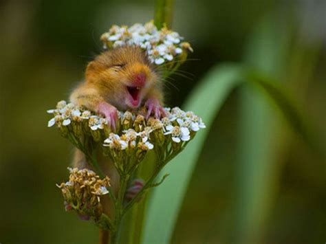 wallpapers  funny animals wallpapers