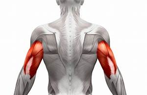 9 Best Triceps Exercises For Strength  Size  And Power