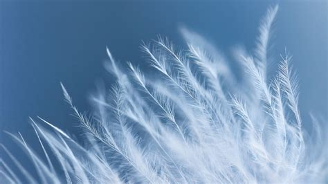feather macro  wallpapers hd wallpapers id