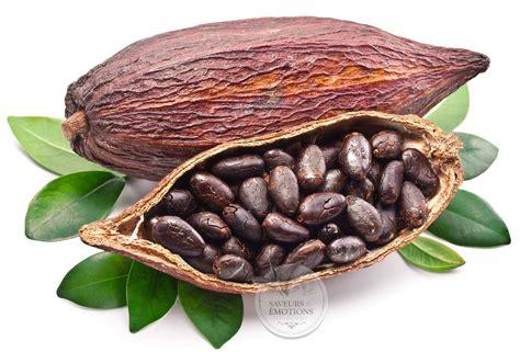 cuisine des legumes l 39 inde et le chocolat pinklotusinindia
