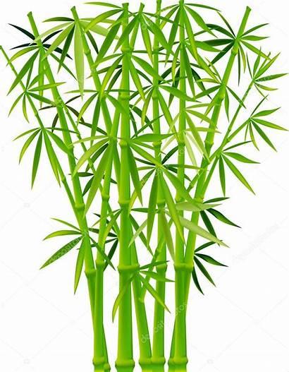 Bamboo Bambou Bambus Bamboe Bambu Depositphotos Illustrations