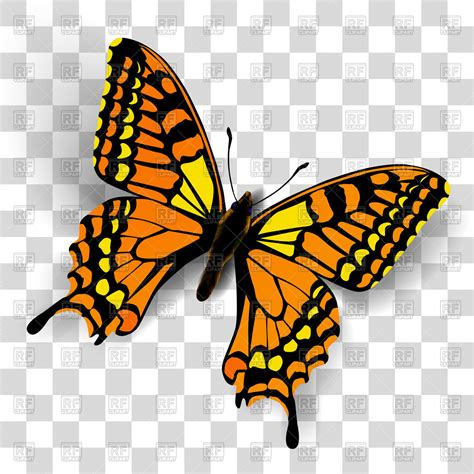 butterfly clipart  transparent background   cliparts  images