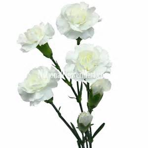 yellow calla mini carnations white