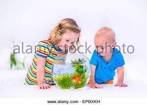 Ein Oder Zwei Kinder : kleinkind junge goldfische im glas oder sch ssel zu betrachten stockfoto bild 52454447 alamy ~ Frokenaadalensverden.com Haus und Dekorationen