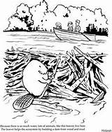 Beaver Dam Clipart Beavers Building Habitat Coloring Busy Lodges Clip Illustration Lodge Kindergarten Pages Cliparts Schoolhouse Rock Elephant Library Clipground sketch template