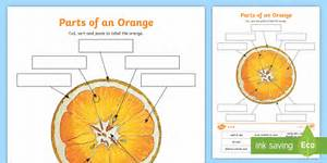 Parts Of An Orange Worksheet    Worksheet  Teacher Made