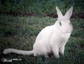 Cat and Rabbit Hybrid