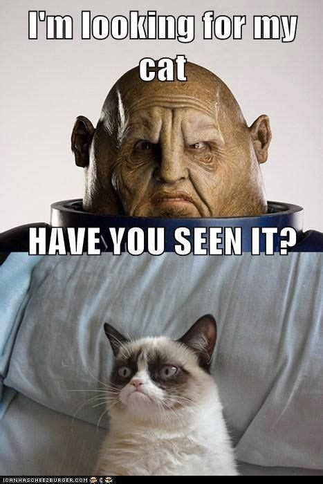 Doctor Who Cat Meme - beat the hump day blues with these doctor who memes