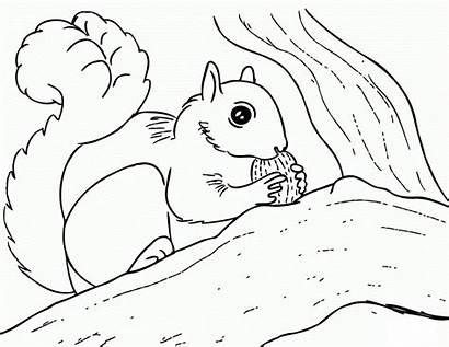 Squirrel Coloring Pages Printable Squirrels Kleurplaten Eekhoorn