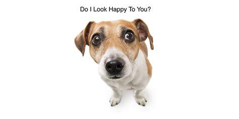 benadryl   give  dog  calm  nerves