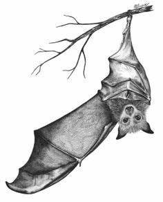 bat tattoo for women - Google Search | tattoo ideas ...
