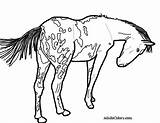 Horse Coloring Appaloosa Pages Pony Spotted Drawing Pinto Wagon Trail Gypsy Printable Train Getcolorings Vanner Colorings Getdrawings Pick Colori Oregon sketch template