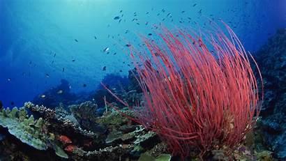 Underwater Wallpapers Backgrounds Ocean Under Sea Pacific