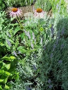 Was Blüht Jetzt Im Garten : garten 39 vorgarten 39 unser reihenh uschen zimmerschau ~ Lizthompson.info Haus und Dekorationen