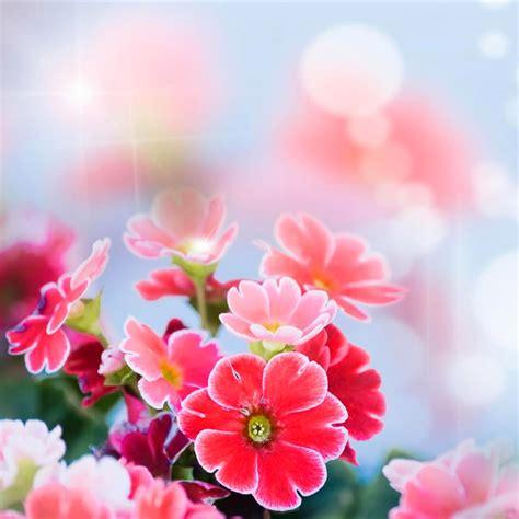 gambar bunga indah  cantik kumpulan gambar