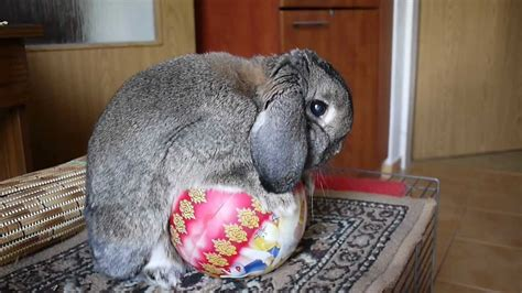 Rabbit Having Sex With Disney Princesses Ball Youtube