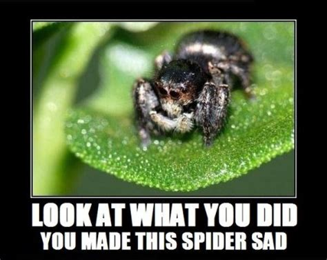 Sad Spider Meme - pictures of horrible spiders page 13 achaea