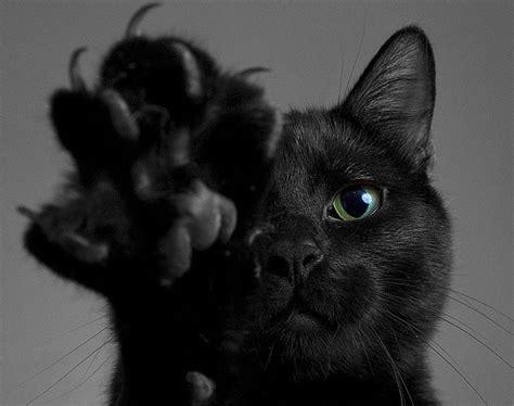black cats black cat appreciation day a well read woman