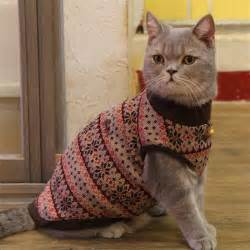 cat sweater catspia tammy cat sweater brown