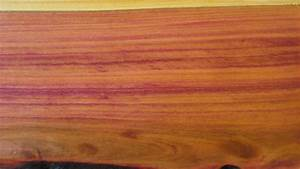 File:Plum wood (with olive oil, polished) 1 jpg