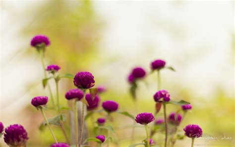 purple garden flowers wallpapers hd wallpapers id