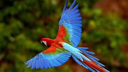 Cool Backgrounds Background Bird Wallpapers Parrot Wallpapercave