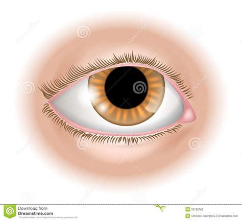 eye body part illustration stock  image