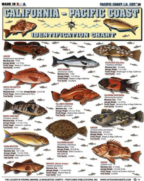CALIFORNIA - Pacific Saltwater Fish - ID Chart - Tightline ...