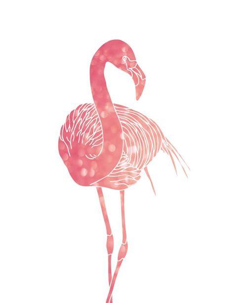 les  meilleures images du tableau flamant rose sur