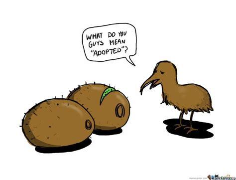 kiwi bird sip advisor