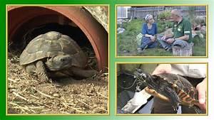 7 punkte zur schildkröten haltung tierheimtv informiert