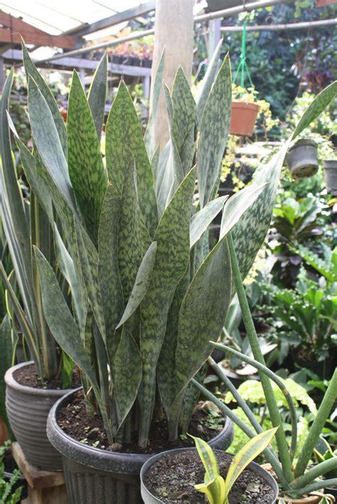 foto tanaman tanaman bunga tanaman hias gambar