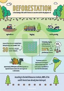 Deforestation Infographic Poster Teaching Resource