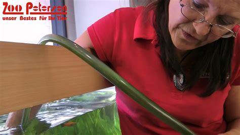Auf Glas Entfernen by Der Tipp Gegen Algen Im Aquarium Zoo Petersen In