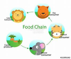 """""""Food chain for kids """" Stock image and royalty-free vector ..."""